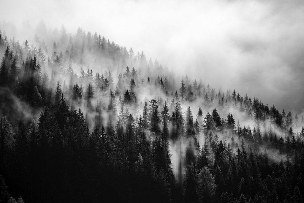 Fog-Forrest.jpg