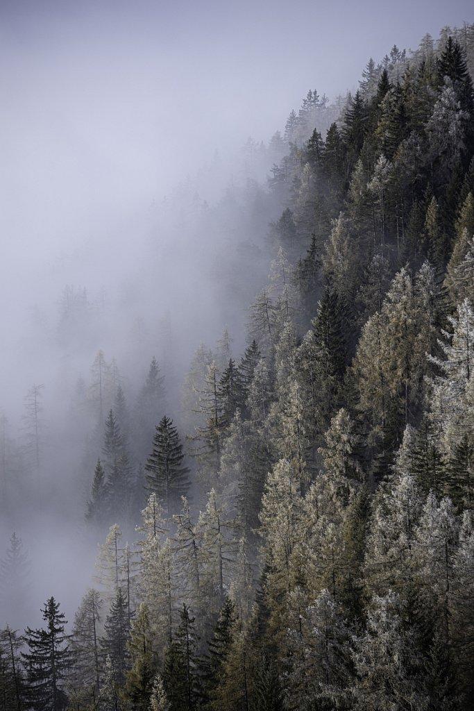 Fog-Forrest2.jpg
